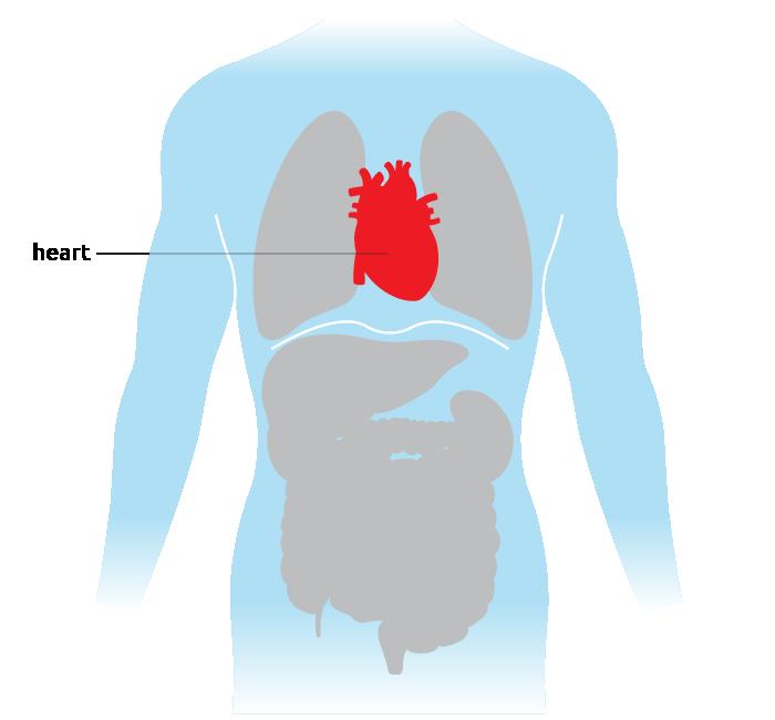 livestream recording heart transplantation - 700×650